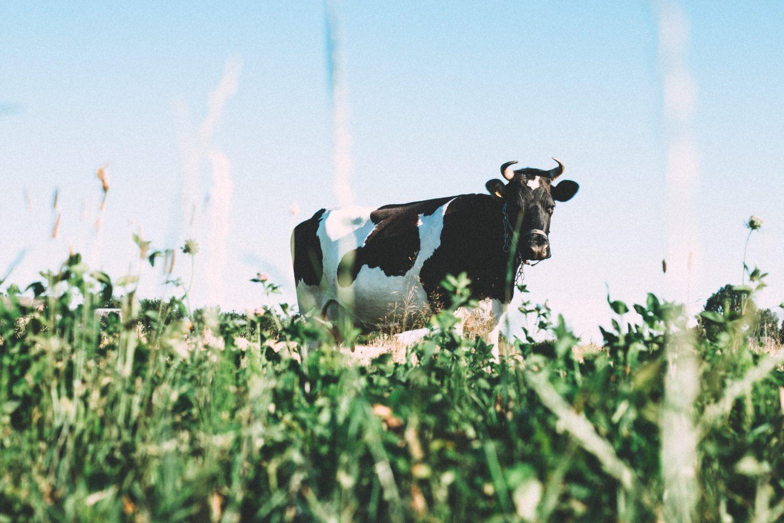 Bí Mật Kiếm Tiền Của Một Cao Thủ Sales Khách Hàng Tiềm Năng Chính Là Những Con Bò Sữa Có Sẵn Trong Chuồng Của Bạn