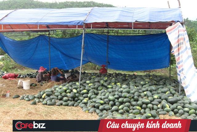 Hiện tại, nhiều nơi dưa hấu chỉ còn giá 1.000 đồng/kg, mua tại vườn. Ảnh: nongnghiep.vn